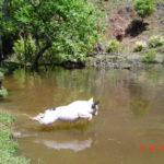 Bulldog Francês x Exercícios físicos: Quebrando paradigmas.